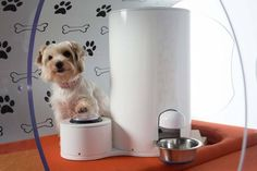 Samsung introduces Smart Home for dogs : TreeHugger