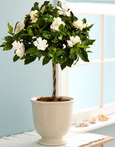 Indoor Plants for Positive Energy