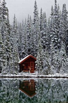 Rustic Cabin of Lake O'Hara Lodge in Snow Elegant rustic cabin of Lake O'Hara Lodge after a fresh autumn snowfall, along Lake O'Hara in Yoho National Park, British Columbia, Canada Cabin In The Woods, Lost In The Woods, Into The Woods, Snowy Woods, Snowy Forest, Forest Cabin, Snowy Trees, Pine Forest, Magic Places