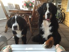 We're sitting outside having some snack - they are begging as good as they can . Tim 7 yrs, Manda 8 mths