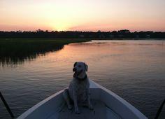 #westmarine #dogdaysofsummer