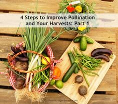 4 STEPS TO IMPROVE POLLINATION & YOUR HARVESTS: Are you disappointed with poor harvests? Flowers + baby fruits forming only to drop, wither & die? Would you love an abundance of home grown food instead? Discover vital pollination tips to help boost your harvest.   The Micro Gardener