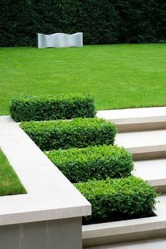 Limestone steps with boxwood rectangles - contemporary garden design by Charlotte Sanderson, photo by #Clive #Nichols