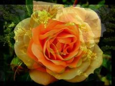 Enya ... My FAVORITE music.  China Roses ... My FAVORITE Enya song.