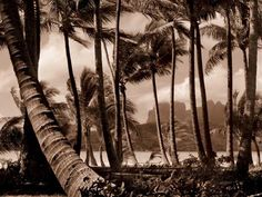 """Forgoing his traditional subject matter, celebrated makeup artist and photographer François Nars captures French Polynesia landscapes and Tahitians in his new #photography book """"Tahiti: Faery Lands.""""#placestogo #travel"""