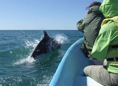 Delfines por GreenReef, Baja California Sur
