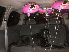 Delivery of balloons to my little friend