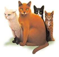 7 Best Warriors Program Ideas images in 2013 | Warrior cats