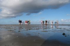 www.hallowaddenzee.nl - wadlopen en sleepnetvissen in Lauwersoog
