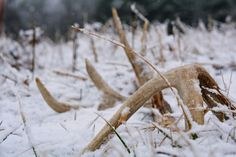 50 Best Shed Hunting images | Hunting, Shed antlers, Shed