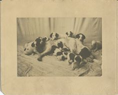 """c.1900 photo of mother dog and her 11 puppies. Large format. Photo itself measures 7.25"""" x 5."""" Photo by Brown, El Reno, Okla. From bendale collection"""
