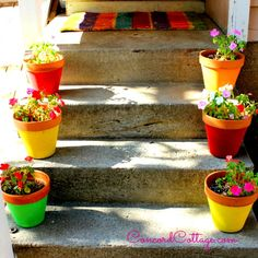 I panted 99 Cents Store Flower Pots and Added Color to my Backyard on a budget!!  #Backyard #Garden #HometalkEveryday