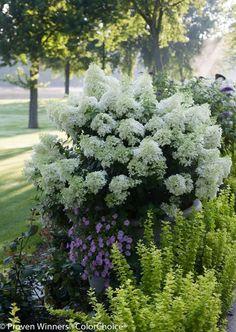 75 Beauty Colorful Bobo Hydrangea Garden Landscaping Ideas https://decomg.com/75-beauty-colorful-bobo-hydrangea-garden-landscaping-ideas/