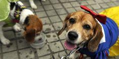 Os cães fazem bem à saúde - SAPO Lifestyle