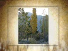 Otoño en Mendoza Mendoza, Windows, Fall Pictures, Argentina, Ramen, Window