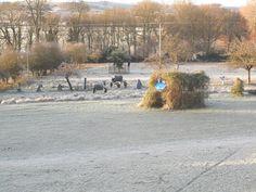 Winter in the garden.