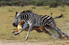 wildlife pics - Yahoo Image Search Results