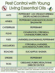 Get rid of bugs with essential oils