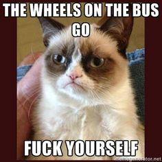 These angry cat memes make me laugh so much!