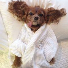 20 Cães Fofos Que Roubaram As Camas De Seus Donos
