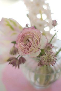 frühlingsblumen wunderschön-gemacht