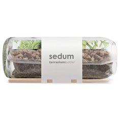 sedum terrarium in a hand-crafted, repurposed wine bottle $40