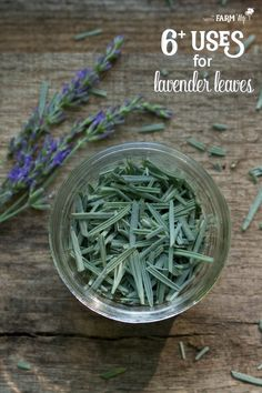 Lavender flowers are only around for a short time, but there are plenty of uses for lavender leaves! Learn how to harvest, dry & use them in DIY projects. - Uses for Lavender Leaves Lavender Uses, Lavender Leaves, Lavender Crafts, Lavender Recipes, Lavander, How To Plant Lavender, Lavender Decor, Lavender For Dogs, Growing Lavender From Seed