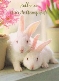 Flower Phone Wallpaper, Wonderful Picture, Farm Animals, Happy Easter, Bunny, Flowers, Christmas, Pink, Advent