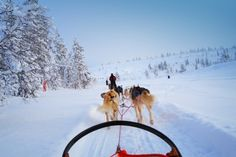 Great experience - dog sledding - try it in Montgenevre or Serre Che