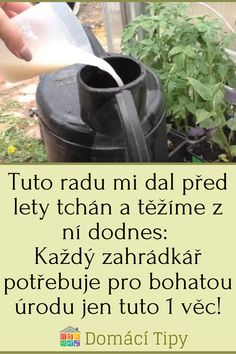 Plants, Gardening, Lawn And Garden, Flora, Plant, Horticulture, Square Foot Gardening, Garden Care