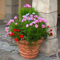Kübelpflanzen im Blog über Garten, Landhaus, Shabby & co #Container #Gardening (Hansapark Germany 2013)
