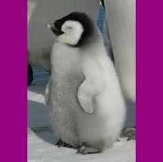 Penguin:)