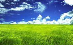 RICH BLUE SKIES WITH BILLOWY WHITE CLOUDS OVER VIBRANT BRIGHT GREEN GRASSES