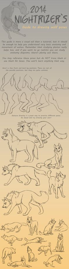 Guide to Drawing Wolf Poses by Nightrizer On DeviantArt Link ~ http://nightrizer.deviantart.com/