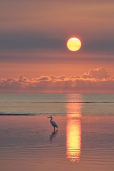 Under a Southern Sun . Egret at dawn in a tidal pool at Beachmere, Queensland, Australia -- by Robert Charity on Strand Wallpaper, Sunset Wallpaper, Beautiful Sunrise, Beautiful Beaches, Nature Pictures, Beautiful Pictures, Sunrise Pictures, Ocean Sunset, Beach Sunrise