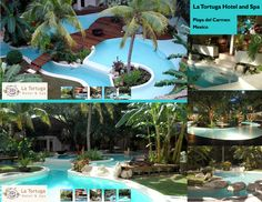 Hotel La Tortuga Playa del Carmen Riviera Maya