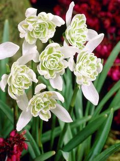 Spring Flowers, Wild Flowers, June Flower, Fall Plants, Deciduous Trees, Early Spring, Plant Care, Perennials, Beautiful Flowers