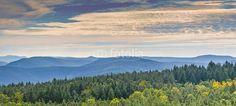 Wald und Berge Pfälzer Wald Blick