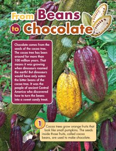Article from Humpty Dumpty Magazine - From Beans to Chocolate. Includes link to video