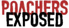 poachers_exposed #ivoryforelephants #elephants #stoppoaching