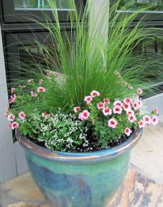 Our front porch container: a Mexican Feather Grass in the center, surrounded by 3 'Strawberry Punch' Superbells, and 3 'Diamond Frost' Euphorbias. Container Flowers, Flower Planters, Container Plants, Flower Pots, Flower Ideas, Succulent Containers, Fall Planters, Mexican Feather Grass, Growing Tomatoes In Containers