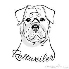 Rottweiler dog head