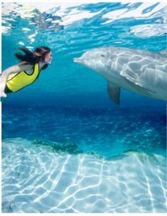Discovery Cove Orlando.. would love to do this with the kids when they are older! ◉ re-pinned by http://www.waterfront-properties.com/jupiterrealestate.php