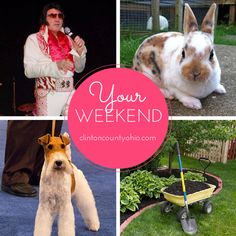 """This is a """"Spring in full swing"""" weekend! Fun options: * Wire Fox Terrier Club Dog Show is at Roberts Centre's Eukanuba Hall  * Ohio Mini Rex Rabbit Club & 2015 Mini Rex Nationals are at Roberts Centre  * See the ultimate Elvis tribute at The Murphy Theatre, Wilmington, Ohio  * Master Gardener's Plant Sale & Workshop at the OSU Extension Community Room. See you this weekend?  http://clintoncountyohio.com/list/events #visitclintoncounty #ohio #Elvis #rabbits #dogshow…"""