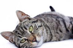 kitten — Foto Stock © Corina Daniela Obertas #2814359