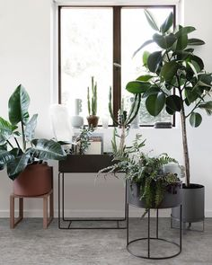 Ferm Living plant box from Ferm Living Plant Box, Stand Design, Interior, Houseplants Indoor, Interior Garden, Indoor Garden, Eco Friendly House, Plant Stand, Ferm Living