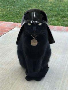 Darth Kitty!