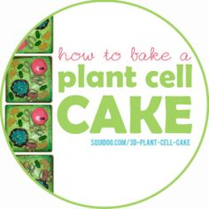 3D+models+--+especially+edible+ones!+--+are+a+fun,+easy+way+to+learn+about+plant+cells.+Not+sure+where+to+begin+with+your+edible+plant+cell+project?...