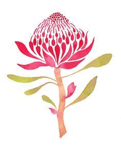 Illustration of a Waratah flower Waratah Flower, Protea Flower, Protea Art, Australian Wildflowers, Australian Native Flowers, Illustration Blume, Botanical Illustration, Watercolour Illustration, Watercolor Cards
