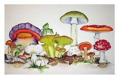 Mushrooms - Pilze Watercolor by Maria Inhoven Watercolor Fruit, Watercolor And Ink, Watercolor Flowers, Bright Art, Ecole Art, Mushroom Art, Nature Drawing, Guache, Nature Illustration